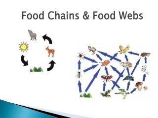 Food Chains & Food Webs