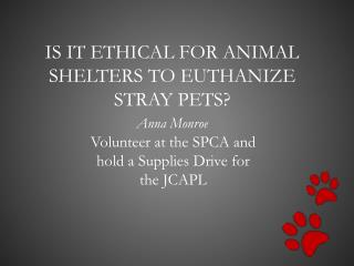 Is it ethical for animal shelters to euthanize stray pets?