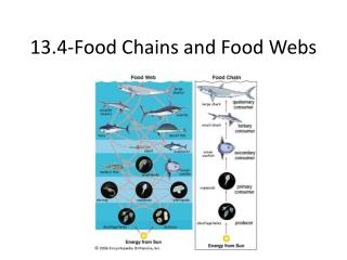 13.4-Food Chains and Food Webs