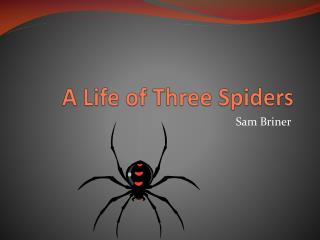 A Life of Three Spiders