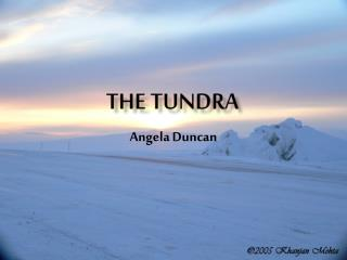 The Tundra