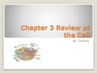 Chapter 3 Review of the Cell