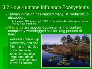 The wetland ecosystem   urban development