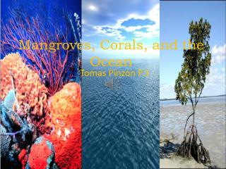Mangroves, Corals, and the Ocean