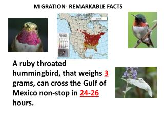 MIGRATION- REMARKABLE FACTS