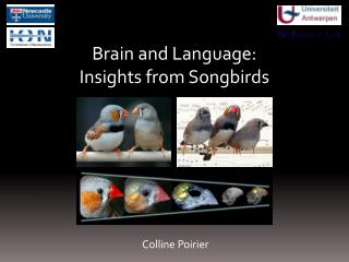 Brain and Language: Insights from Songbirds