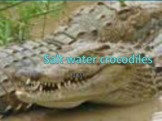 Salt water crocodiles