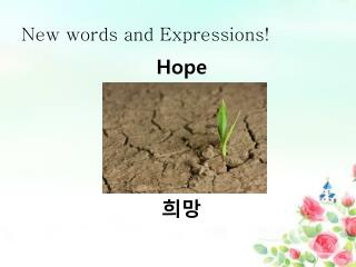 New words and Expressions!