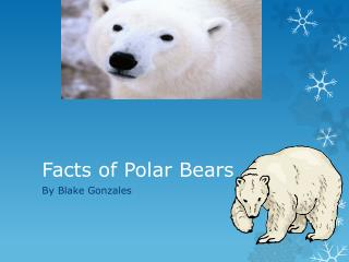 F acts of Polar  B ears