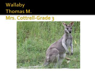 Wallaby Thomas  M. Mrs. Cottrell-Grade 3