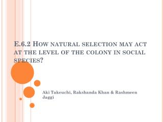 E.6.2 How natural selection may act at the level of the colony in social species?