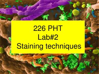 226 PHT Lab#2  Staining techniques