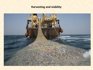 Harvesting and viability