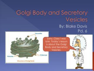 Golgi Body and Secretory Vesicles