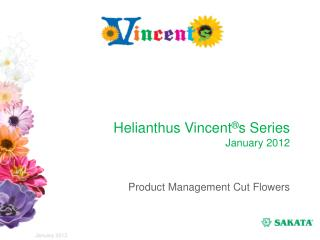 Helianthus Vincent ® s Series January 2012
