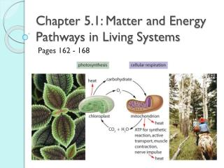 Chapter 5.1: Matter and Energy Pathways in Living Systems