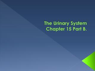 The Urinary System Chapter 15 Part B.