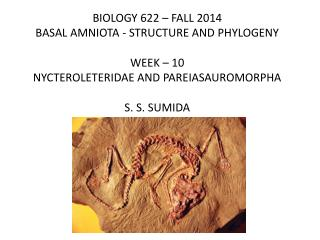 BIOLOGY 622 – FALL 2014 BASAL AMNIOTA - STRUCTURE AND PHYLOGENY WEEK –  10