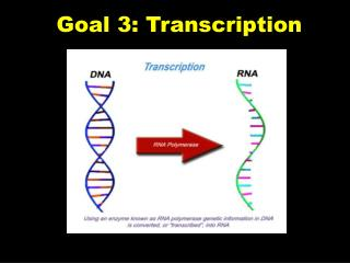 Goal 3: Transcription