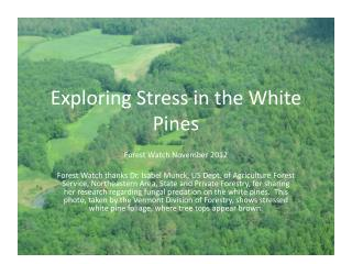 Exploring  Stress in the White Pines