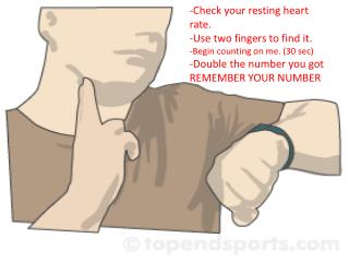 -Check your resting heart rate.  -Use two fingers to find it.  -Begin counting on me. (30 sec)