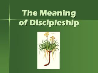 The Meaning  of Discipleship