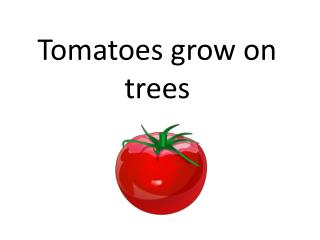 Tomatoes grow on trees