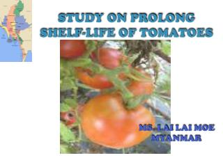 STUDY ON PROLONG SHELF-LIFE OF TOMATOES