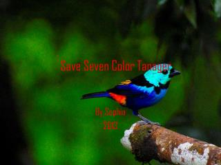 Save Seven Color Tanager