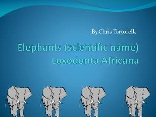 Elephants (scientific name)  Loxodonta  Africana