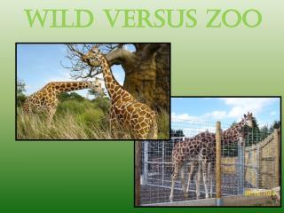 Wild versus zoo