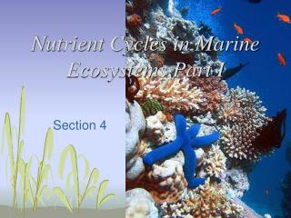 Nutrient Cycles in Marine Ecosystems Part I