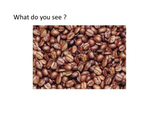 What do you see ?