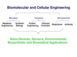 Biomolecular  and Cellular  Engineering