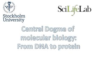 Central  Dogma of molecular biology : From DNA  to  protein