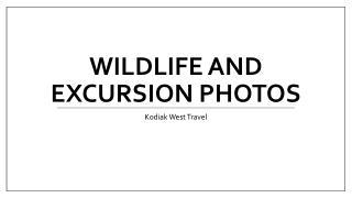 Wildlife and Excursion Photos