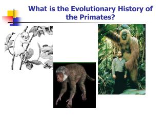 What is the Evolutionary History of the Primates?