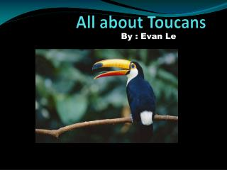 All about Toucans