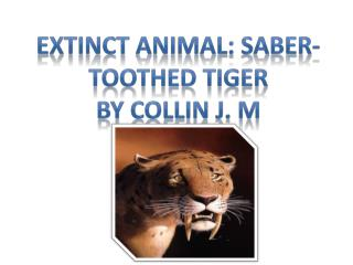 Extinct Animal: Saber- toothed Tiger By collin J. M
