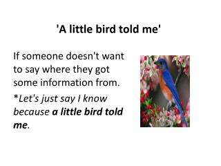 'A little bird told me'