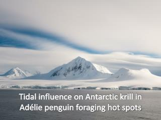 Tidal influence on Antarctic krill in Adélie penguin foraging hot spots