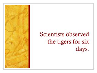 Scientists observed the tigers for six days.