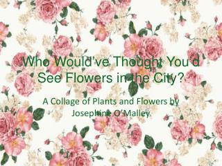 Who Would've Thought You'd See Flowers in the City?