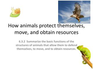 How animals protect themselves, move, and obtain resources