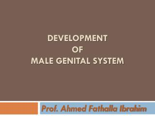 Development  of  male genital system