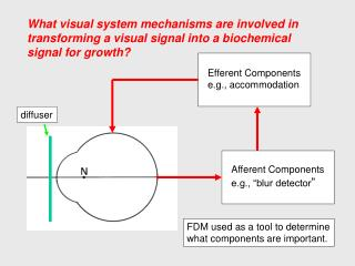 What visual system mechanisms are involved in transforming a visual signal into a biochemical signal for growth