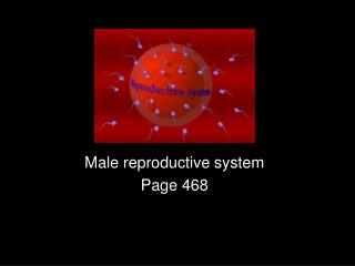Male reproductive system Page 468