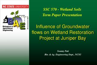 Influence of Groundwater flows on Wetland Restoration Project at Juniper Bay