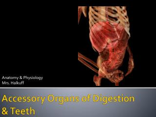 Accessory Organs of Digestion  & Teeth