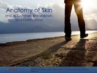 Anatomy of Skin and its Defense, Breakdown, and Fortification